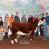 Heifer_Ch_Hereford_LDH_0822c