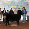 1Heifer_3rd_LDH_0779c