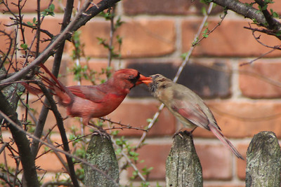 Mr and Ms Cardinal...