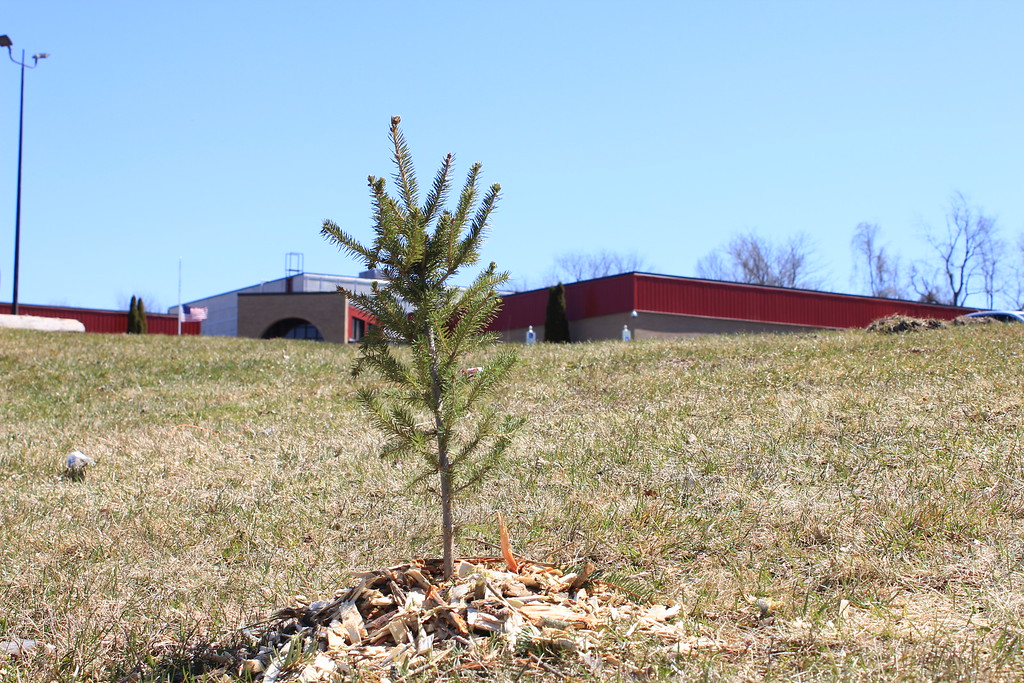 . Charles Pritchard - Oneida Daily Dispatch One of the first trees planted for Earth Day by Oneida Rotary outside of the YMCA on Sunday, April 22, 2018.