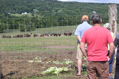 Charles Pritchard - Oneida Daily Dispatch Visitors check out what local farms have to offer at Open Farm Day on Saturday, July 28, 2018.