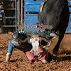 DAVID BEVERIDGE-BKBD-BULL RIDING-SA-125
