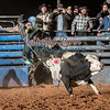 CODY GILBERT-BKBD-BULL RIDING-SA-101