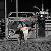 DAVID BEVERIDGE-BKBD-BULL RIDING-SA-124