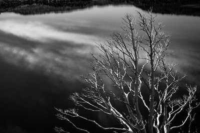 Dead branches and lake