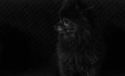 AnthonySchirer-BlackonBlack