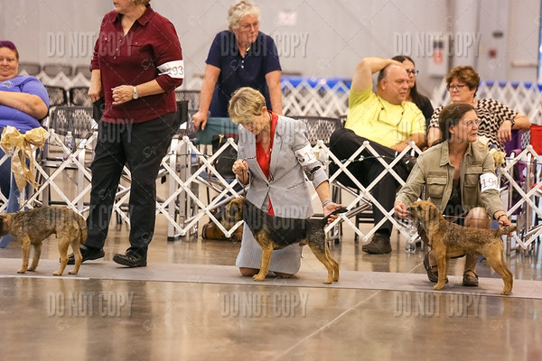 BTCOA National Specialty   Best of Breed