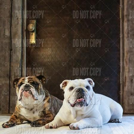 Bulldog Book