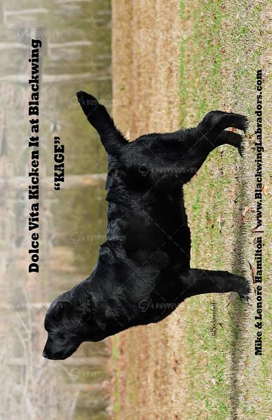 Blackwing2-kage