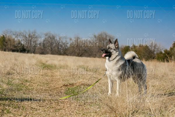 STORY | Elkhound
