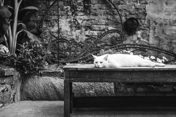 Preservation Hall's guard cat on a break!