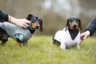 023-Dachshund-Walk-Ben-Unwin-Photography