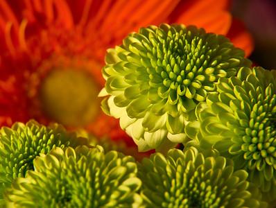 02.18 Sunday Flowers