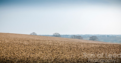 Fields of Mud