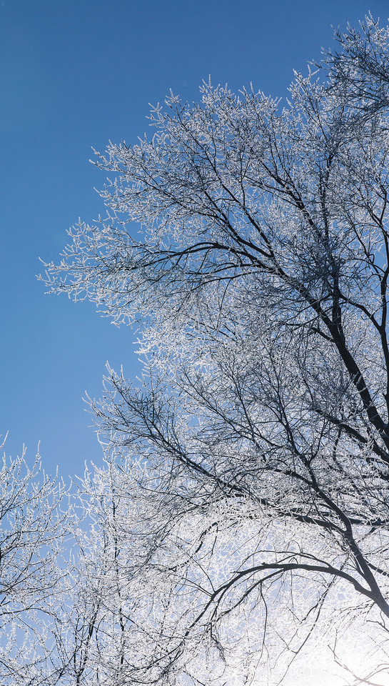 An icy morning in West Lafayette, Indiana (Dave Wegiel Photography)