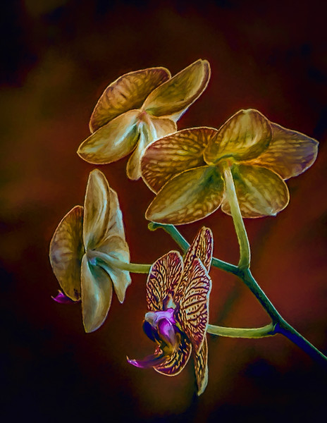 Orchid on Red