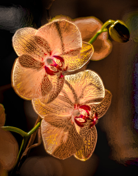Painted Pink Orchid