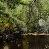 Gardiners Creek Billabong