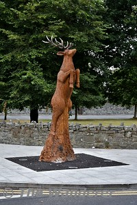 A rotting Spanish chestnut tree, which has been a very distinctive feature of a busy Killarney junction for a generation, has been transformed into a spectacular piece of wood sculpture depicting a native red deer. Expert tree sculptor Will Fogarty, of the Ballyhoura, Co Limerick based Fear na Coíllte Chainsaw Carvings, finished the project just in time for the Royal visit on Friday 17th June, a number of weeks after he commenced the painstaking and meticulous carving which shows a red deer leaping into the air. Sat 14.07.18