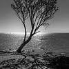 The Tree ~ Black & White