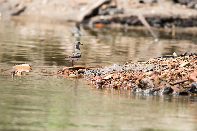 Birds along Wabash River Banks Vigo County