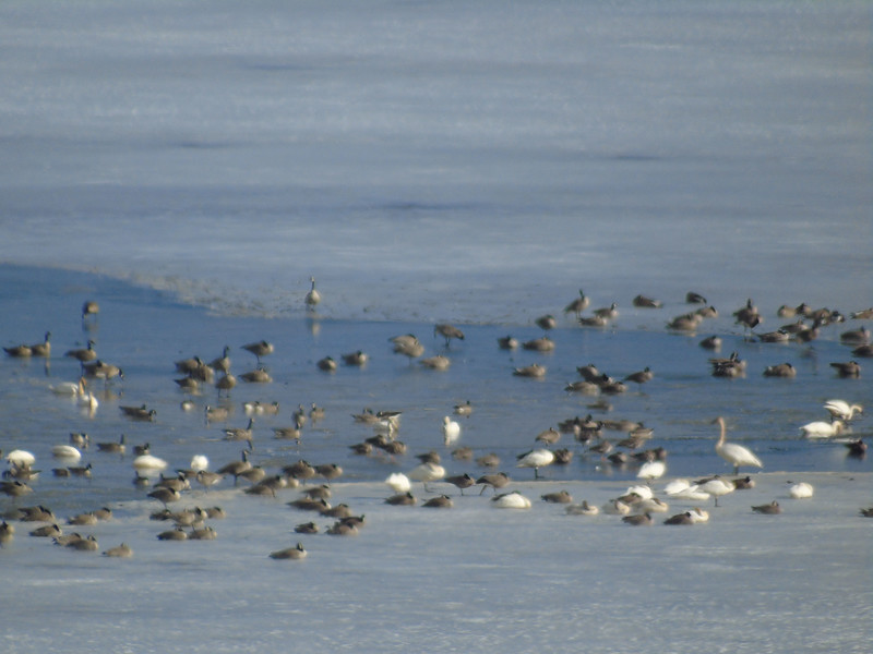 Birds and Fowl at the Refuge Area