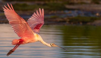 Pink Divinity II