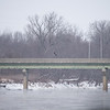 Bald Eagle Wabash River Icy River