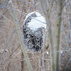 Hornets Nest in Snow