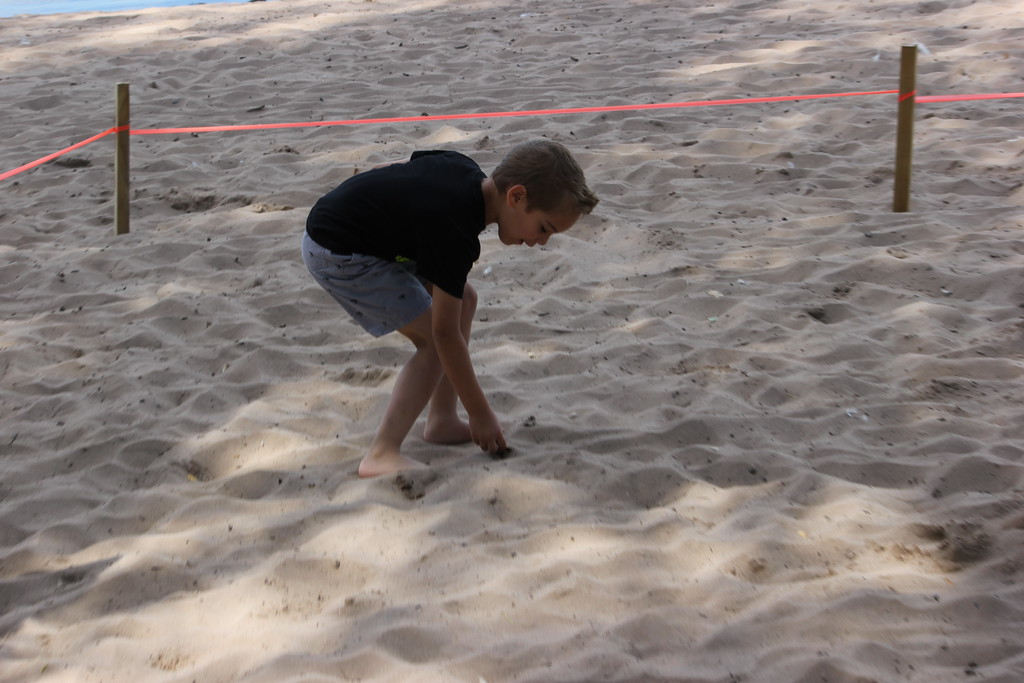 . Charles Pritchard - Oneida Daily Dispatch Children search in the sand for gold dubloons for Pirates Weekend on Saturday, July 21, 2018.