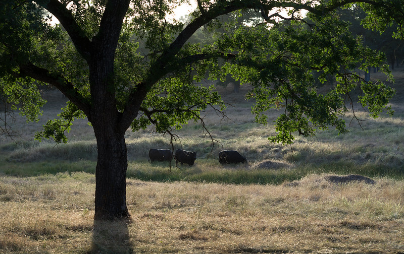 The Ranch in the Evening Light