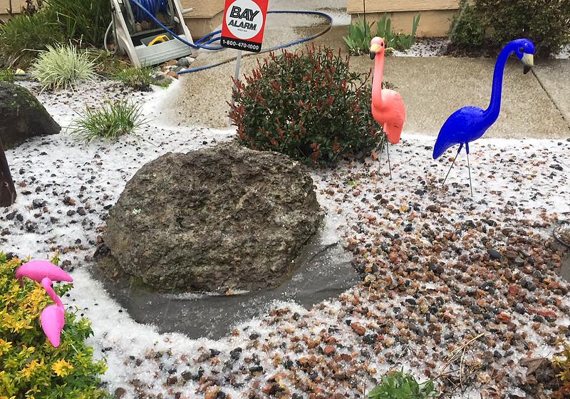 flamingo hail