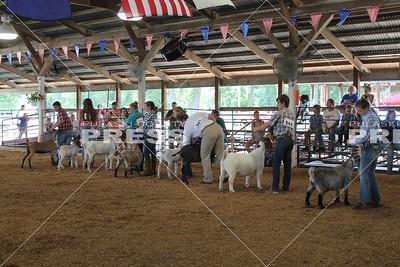 4-H Goats Show