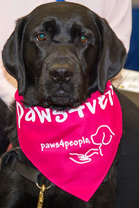 Pink Day (Paws4people)-0009