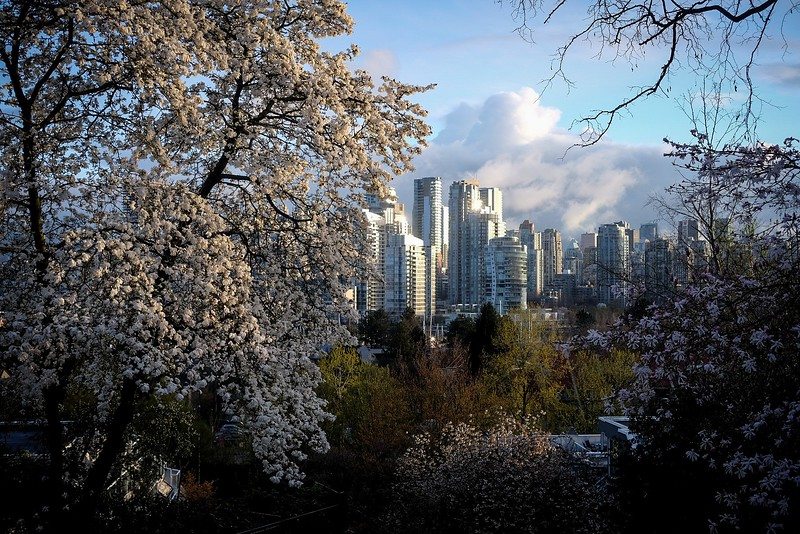 April 12, Vancouver, Fairview, Choklit Park