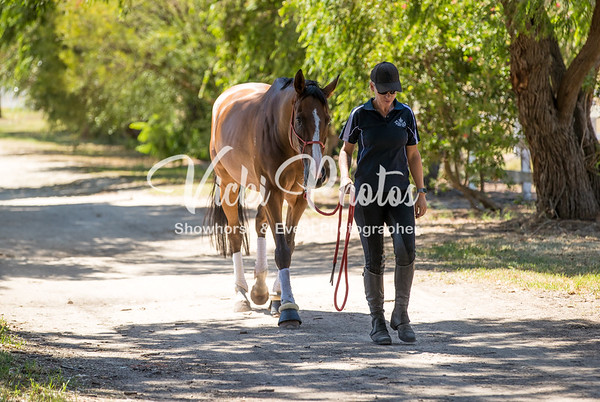 Brookleigh Working Equitation Club - 13.2.2018