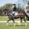 Bunbury Ag Show -  Dressage 15 4 2018-4714