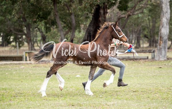 Progeny on Parade Foal & Yearling Show - 6th May 2018