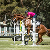 WASJA Show Jumping - 10 3 2018-5460