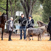 Wooroloo Breed Show - 22 4 2018-1284