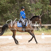 Zamia Dressage Series - 17 2 2018-459