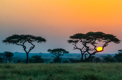 Serengeti sunrise    to see more of my photos visit ericalperphotography.com