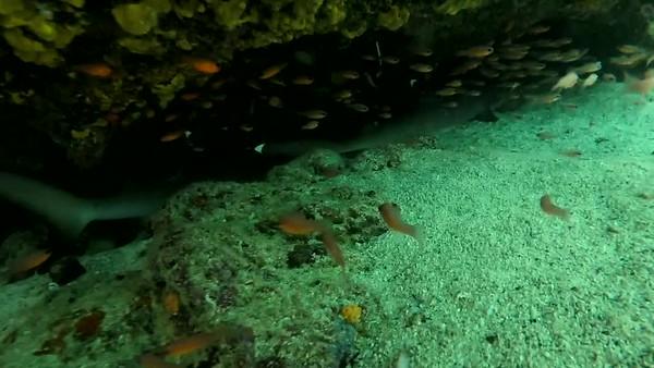 Sombrero Chino Sharks