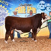 Champ_HerefordBull_ChesneyEffling_2