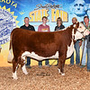 Res_JuniorHerefordFuturityHeifer_Prickett