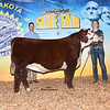 Res_JuniorHerefordFuturitySteer_Simmermon