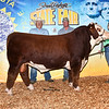 Champ_HerefordBull_ChesneyEffling