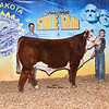 Champ_JuniorHerefordFuturitySteer_Miller