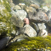 underwater river rocks being washed by mountain stream
