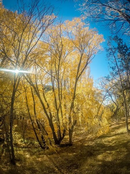 autumn season backsgound autumn leaves in park